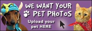 Pet photo upload promo 320x100