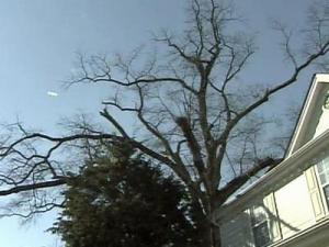 A dead tree can drop limbs or topple. The owner can be sued for damages if they occur, but cannot be forced to remove the tree to prevent an incident.