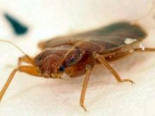 Triangle pest experts tackle growing bedbug problem