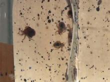 New heat treatment scorches exploding bedbug problem