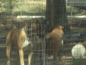 Several customers paid for puppies they did not receive.