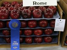 A shiny, sweet crop of Rome apples takes the blue ribbon.
