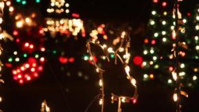 Meadow Lights
