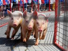 The Ham and Yam Festival is held every year on the first weekend in May along the Town Commons in downtown Smithfield.