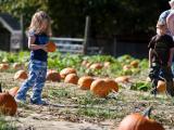 Pumpkin_Farms_10-15-11-05