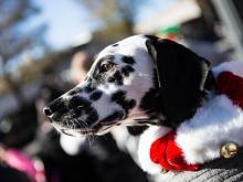 2015 WRAL Raleigh Christmas Parade