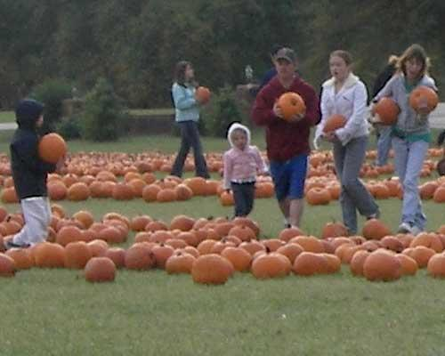 Pumpkin Picking at Hill Ridge Farms