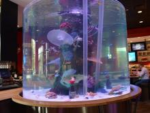 "Check out photos of The Cowfish's fish tank, which was featured on the TV show ""Tanked."""