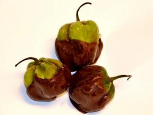 NCBeerGuys Hot Pistol Blazing Rounds: chocolate-covered, raspberry jelly-filled habanero peppers.