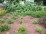 Sherton Imperial garden