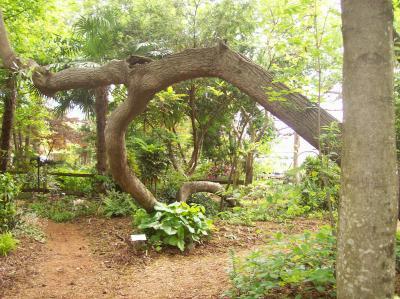 Juniper Level Botanical Garden