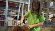 Some State Fair kids work on the farm