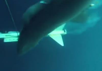 A new YouTube video offers a glimpse into the frightening speed and stealth with which a great white shark can strike. (Deseret Photo)