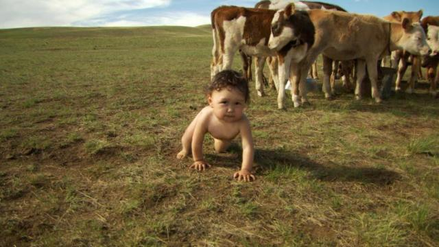 Bayarjargal, who lives in Mongolia with his family, is one of four babies followed from birth to first steps in Thomas Balmès' BABIES, a Focus Features release.  Photo credit: Focus Features