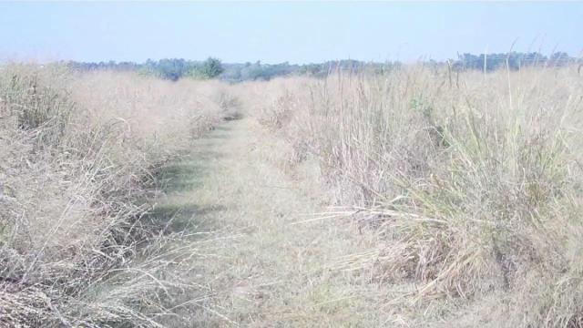 Prairie trail at Prairie Ridge Ecostation