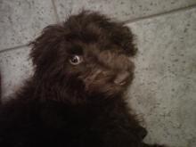 Amanda Lamb's puppy