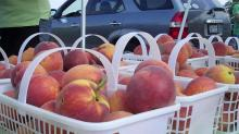 Peaches at the Western Wake Farmers Market