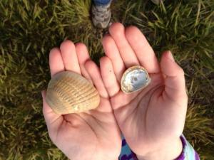 Shells in Hatteras