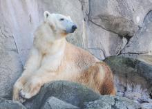 Aquila at the N.C. Zoo