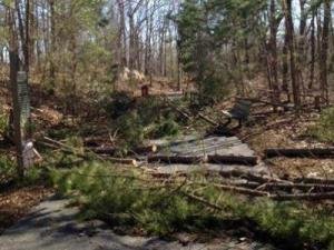 Fallen trees that covered a visitor walkway at the N.C. Zoo over the weekend have now been cleared. N.C. Zoo Photo.
