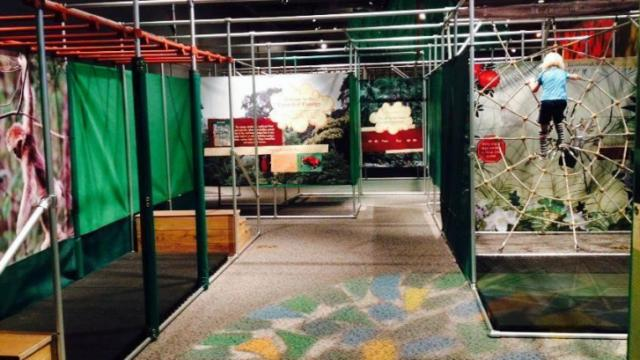 Kids can climb a spider web and hang from monkey bars at the new Rainforest Adventure exhibit at the N.C. Museum of Natural Sciences in downtown Raleigh.