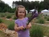 Picking lavender at Mezza Luna Lavender Farm