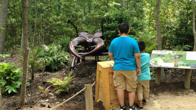 Kids check out the stag beetle on display.
