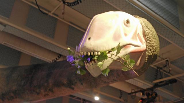 Mamenchisaurus's head looms over the exhibit.
