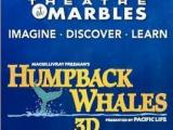 Humpback Whales 3D at Marbles