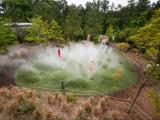 Museum of Life and Science's Into the Mist