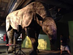 The 15-foot-high model of extinct Indricotherium, the largest land mammal known to date, is a centerpiece in the new exhibit at the N.C. Museum of Natural Sciences.