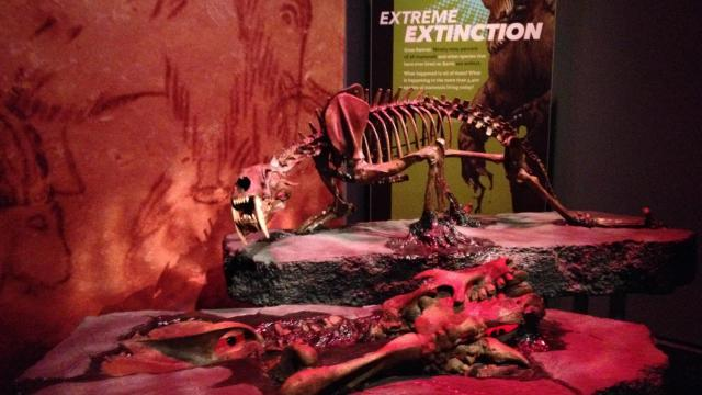 The special exhibit runs Sept. 26 to March 27 at the N.C. Museum of Natural Sciences.
