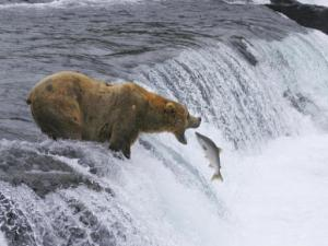 A scene from National Parks Adventure 3D, which opens at Marbles' IMAX theater on Feb. 27. Courtesy: Marbles Kids Museum