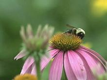 UNC's Garden Could Be Good For Your Health
