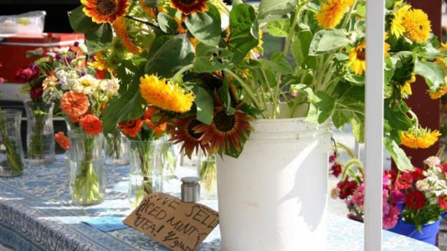 Sunflowers and zinnias from Beausol Gardens in Pittsboro. Photo by Dolly R. Sickles.