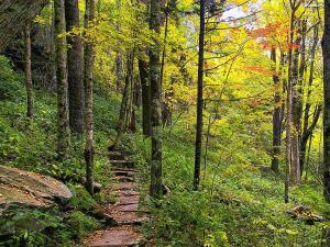Oct. 12 was overcast at Grandfather Mountain but the hillsides are alive with fall color.  This photo taken by Skip Sickler on Grandfather Mountain State Park's Profile Trail shows that the color is really making its way into the depths of the forest.