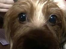 'Bad Dog' BooBoo gets attitude adjustment
