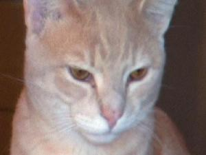 Cathy Daughety, of Rocky Mount, says that her 10-month-old kitten, Buddy, attacked her while she was holding another cat. Daughety had cuts and gouges on her leg that required treatment at a local hospital's emergency room.