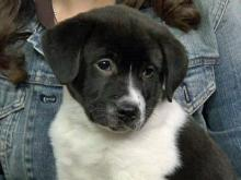 'Pet of the Day' for May 7