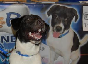 WRAL's newsroom dog, Tracker, smiles Saturday at AKC's Responsible Dog Ownership Day.