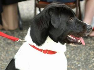 WRAL's newshound Tracker enjoys Fayetteville's annual Dogwood Festival over the weekend.