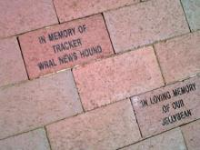 A look at the brick placed in honor of WRAL's newshound Tracker at the North Carolina State University's Randall B. Terry, Jr. Companion Animal Veterinary Medical Center.