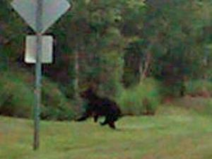 WRAL viewer Clint Ferrell shared this picture of a bear near Garner Magnet High School on Wednesday, May 18, 2011.