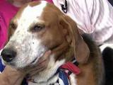 Pet of the day: June 12, 2011