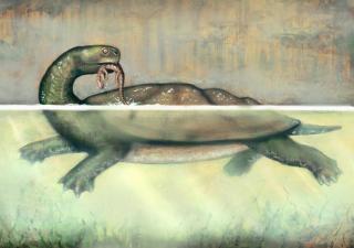 An artist's rendering shows the Carbonemys cofrinii eating a small crocodylomorph. (Artwork by Liz Bradford)