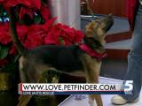 Dec. 9 Pet of the Day