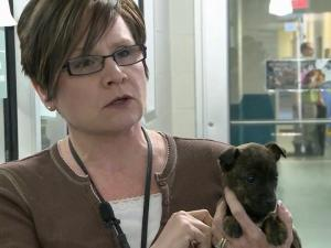 Wake animal shelter employees have helped give some dogs temporary homes.