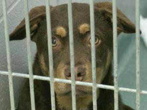 Wake County Animal Shelter