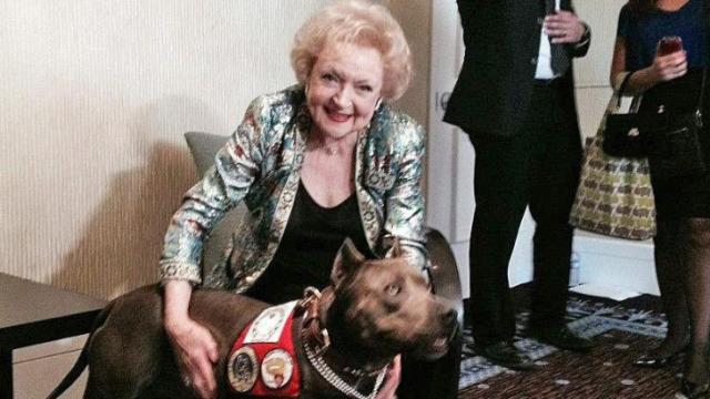 Actress Betty White poses for a cell phone picture with Elle the Pit Bull after the dog's big win at the 2013 American Humane Association Hero Dog Awards.