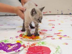 Kitten & Puppy Art Show and Open House